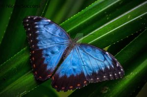 Rainforest Butterfly by Ceronie