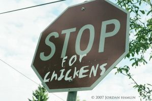 Stop.. in the name of poultry by Frankiedabat
