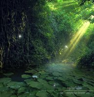 enchanted forest by Creamydigital