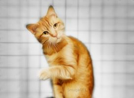 RED CAT by smuga