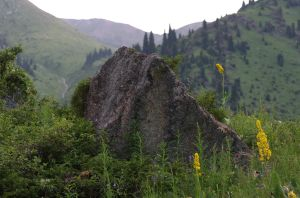 Mountain rock with flowers by voldemometr