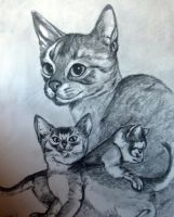 Abbycats by pumibel