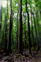 forest iphone retina wp by geyl