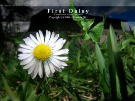 First Daisy by Arnaldo-aka-Homer