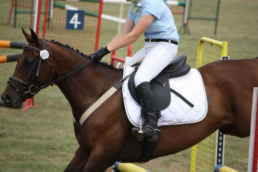 STOCK Showjumping 492 by aussiegal7