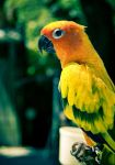Bird of some kind. by Stephen-Grennell