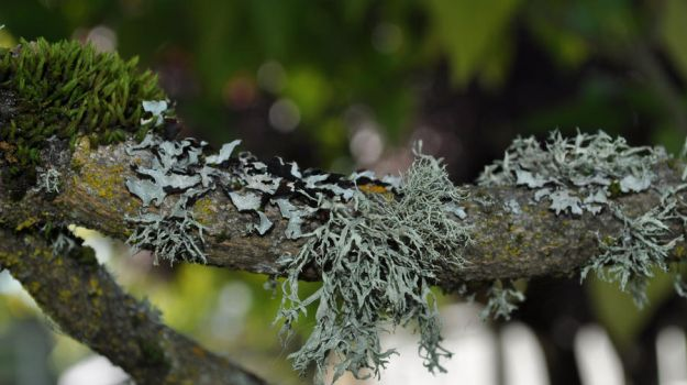 Eden of moss and lichen by snoogaloo