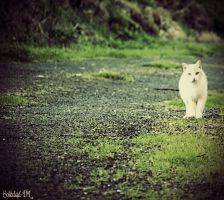 Cat by mysteria-dl