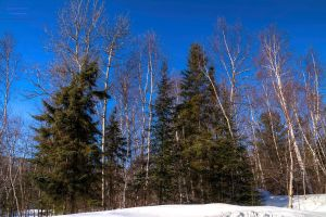 Winter Trees scene HDR by digswolf