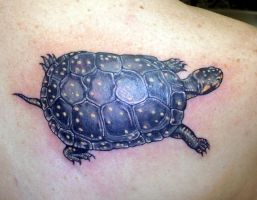 spotted turtle by Ogra-the-Gob