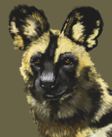 Wild Dog by Tzel-ha-Lyla