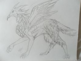 exotic griffon by vanazza