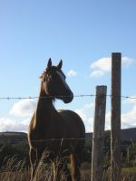 Horse In The Sun by Marroon