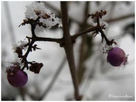 Berries and Snowflakes by missionverdana