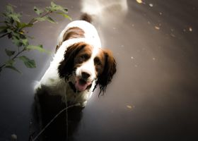 dog swimming by arjantje