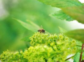 Bee by PenguinPhotography