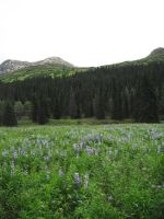 Blue Flowers Meadow 5 by prints-of-stock