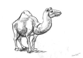 camel by Di---Chan