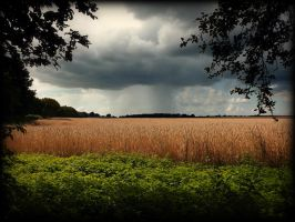 The Golden Corn Before the Storm by DanielBrooksLaurent