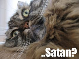 LOLcat by AllyGater