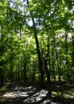 Wooded Road by RRGreiner