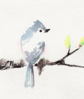 Tufted Titmouse by Jiuhl
