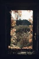 window to beauty by Mortsnort