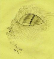 eye's cat by atsumimag