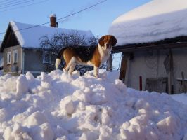 Beagle in winter by PatrikEffect