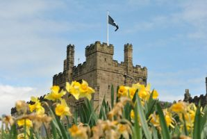 Daffodils and Castle by alanhay