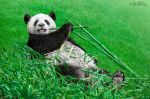 Bamboo Right in my Stomach! by BenHeine