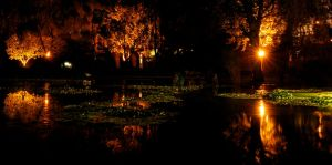 Night Among the Lilies by rrgreg