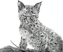 The Lynx Cub by i-love-renji