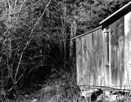 Old Shed-Dark Woods by Fatala