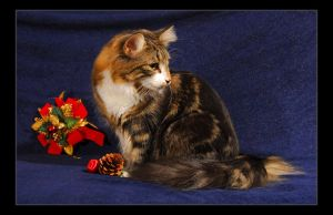 Norwegian Forest Cat10 by fiamen