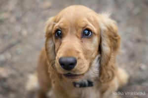 puppy :) by aussiefoto