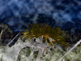 flower in the storm by zois-life