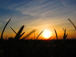 Sunset and grass by Daisydog8