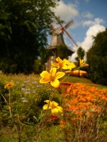Colours of late summer by eschlehahn