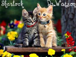 sherlock and dr.watson kittens by DocsCompanion