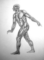 Male muscles study by reinisgailitis
