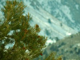 Pine Cones with a Snow Backdrop by bowencormac
