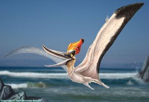 Male Pteranodon Sternbergi Reconstruction by TheDragonofDoom