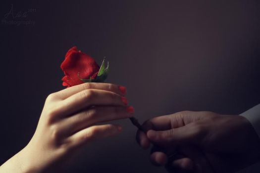 Just a rose by ameera07