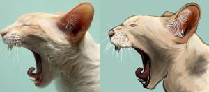 Yawning Cat by TheSleeperAwakes