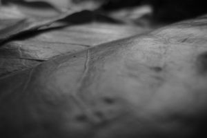 Black and White Leaf by Embrace-The-Night