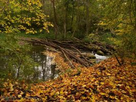 The Fall by the River by rici66