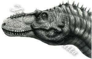 Alioramus head (B/W) by amorousdino