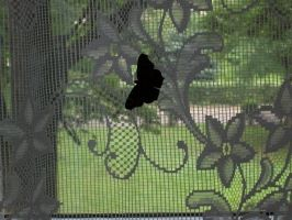 Butterfly on the curtain by Qymaen