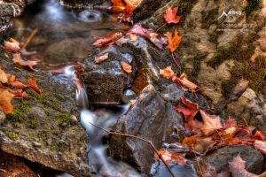 HDR Autumn Trickle Stream by Nebey